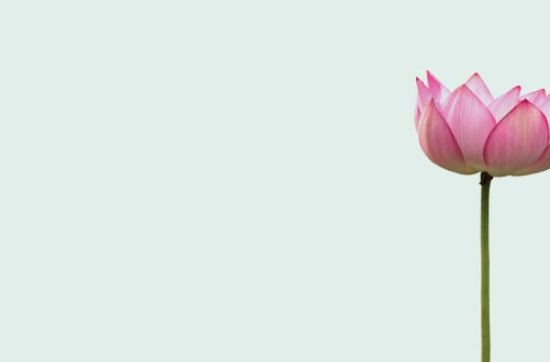 lotus for retreat program